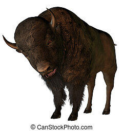 Bison  - bison isolated on white