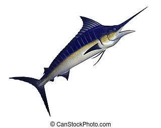 marlin - illustration of marlin fish isolated on white...