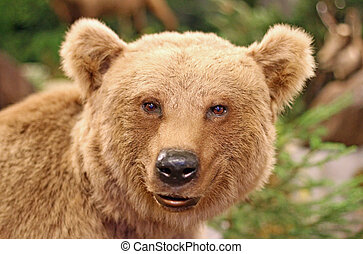 face of a brown bear in the middle of the forests - cute...