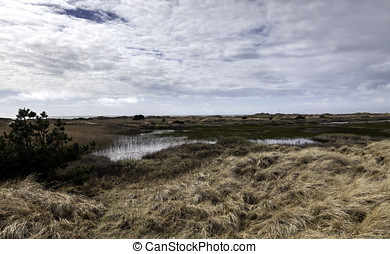Moor on the center of Fano, an island in the Danish wadden sea