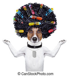 hairdresser dog with curlers - afro look dog with very big...
