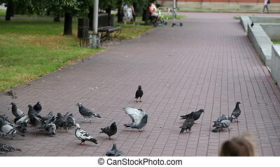 Child and pigeons - City pigeons not being afraid of a...