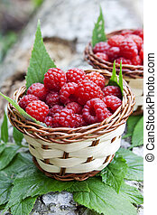 Raspberry Baskets - ripe raspberries placed in baskets with...