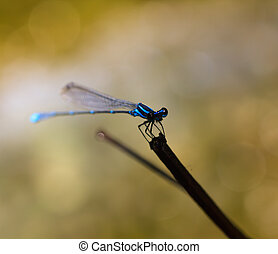 Dragonfly - Close-up of blue dragonfly