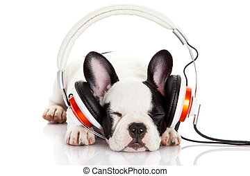 dog listening to music with headphones isolated on white...