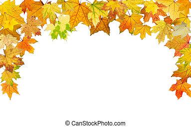 Autumn border - Maple autumn leaves falling border, on white...