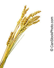 Stalks of wheat ears isolated on white background