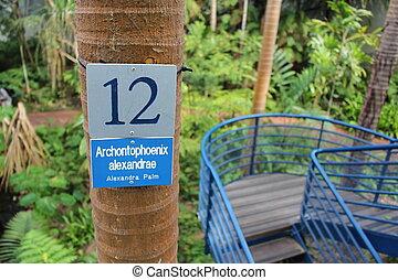 Un, árbol, bicentenario, invernadero