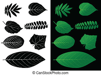 Leaf Silhouette Vector Illustration
