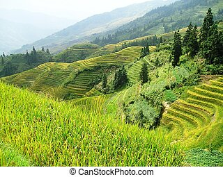 Hillside rice terraces in Asia - Ping'an in South West China...