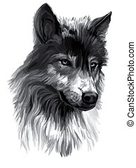 Wolf,illustration - Illustration of a wolf, watercolor