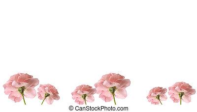pink rose flower border