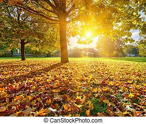 otoño, soleado, follaje