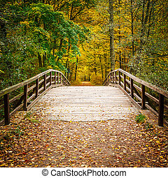 Bridge in autumn forest - Wooden bridge in the autumn forest