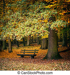 Bench in autumn forest - Wooden bench in the autumn forest