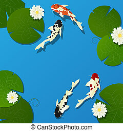 Koi fish and lotus leaves, flower