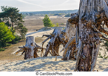 tree trunk in a sandy desert landscape - tree-stumps in a...