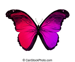 Red violet butterfly, isolated on white ba