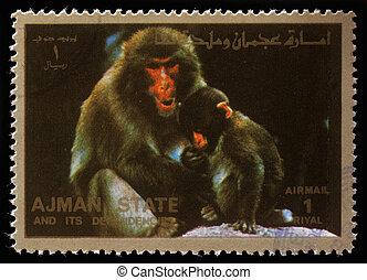 AJMAN - CIRCA 1973: stamp printed by Ajman shows monkeys,...
