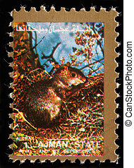 AJMAN - CIRCA 1973: stamp printed by Ajman shows squirrel,...