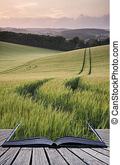 創造性, 概念, 頁, 書, 夏天, 風景, 圖像, 小麥,...