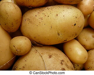 Home Grown Potatoes - Close up of group of home grown...