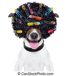 crazy curly hair dog - dog with a crazy curly afro look wig...