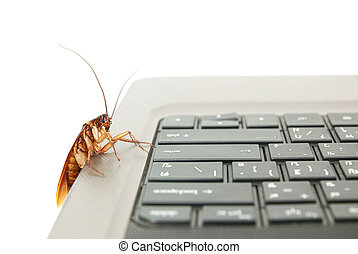 Cockroach climbing on keyboard to present about computer...