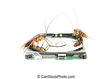 Cockroaches climbing on hard disk drive to present about...