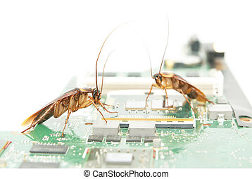 Cockroaches on circuit board - Cockroaches climbing on...