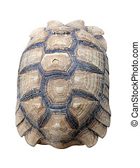 Texture of Turtle carapace isolated white background.