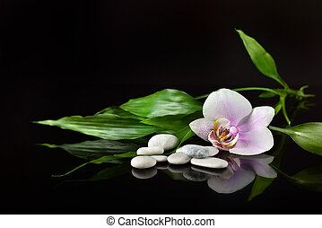background of a spa with stones, orchid flower and a sprig...