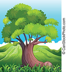 A big old tree - Illustration of a big old tree