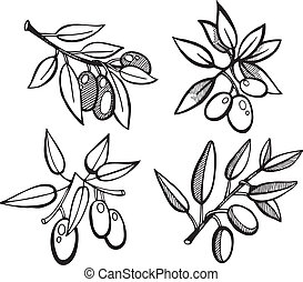 Drawing Olives set - Vector illustration of Drawing Olives...
