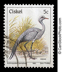 Stamp printed in Ciskei shows bird - CISKEI - CIRCA 1981: A...