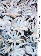 close up shot of some mediterranean edible octopusses in a...