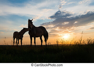 two horses at sunset - foal and mare - two horses at sunset