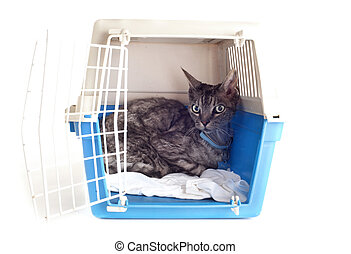 cat in pet carrier - cat closed inside pet carrier isolated...