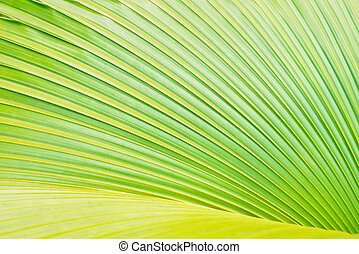 Green palm tree leaf as a background