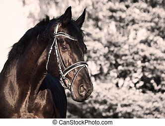 Beautiful black stallion portrait