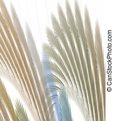 Fanning Layers Abstract - Flowing, fanning textures effect -...