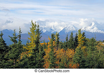 Alaskan Vista - Forest and Mountains cover the Alaskan...
