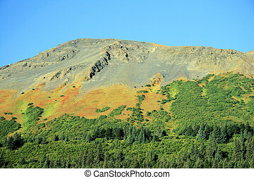 Alaskan Beauty - Forest and Mountains cover the Alaskan...