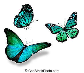 Trois, turquoise, papillon