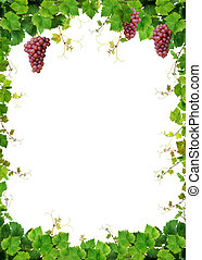 Grapevine border with pink grapes - Fresh grapevine border,...