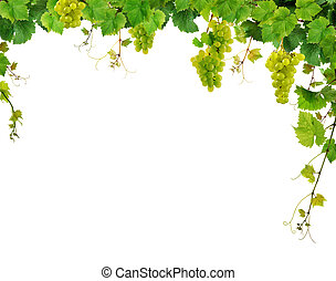 Fresh grapevine with grapes - Grapevine border with grapes,...