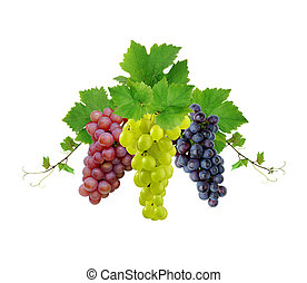 Three various grapes - Decorative fresh grapevine and grapes...