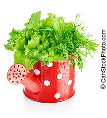 green herbs in red watering can