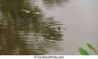 Pond skaters on a surface of water