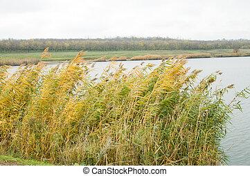 rushy lake